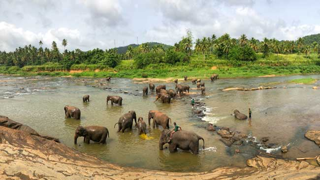 Elephant Orphange in Colombo, Sri Lanka Fortune Connect Holidays has customized package for all Indiviual.