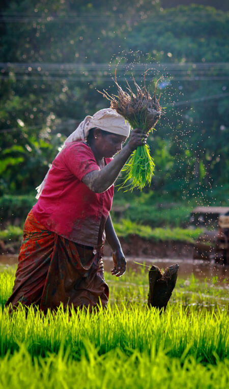 Farming in Kerala , Visit Villages in Kerala and see the nature and beauty of Kerala