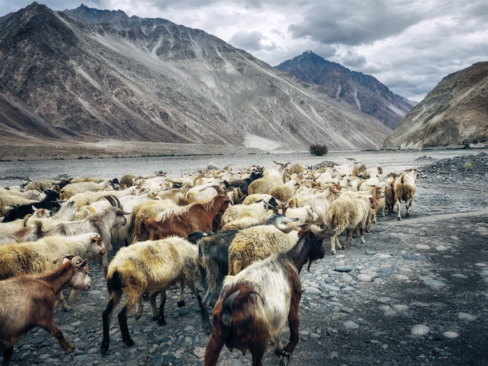 Visiit the Nature and beauty of Ladakh . Plan your trip with Fortune Connect Holidays