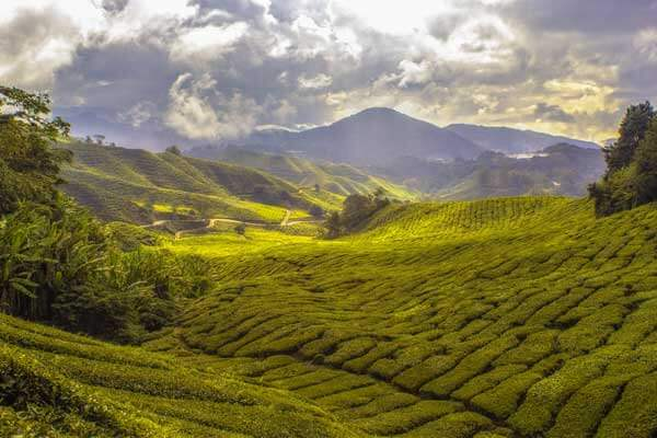 Camland Malaysia, the beauty of Nature, beautiful view, Hill station, travel with Fortune Connect Holidays, Nature